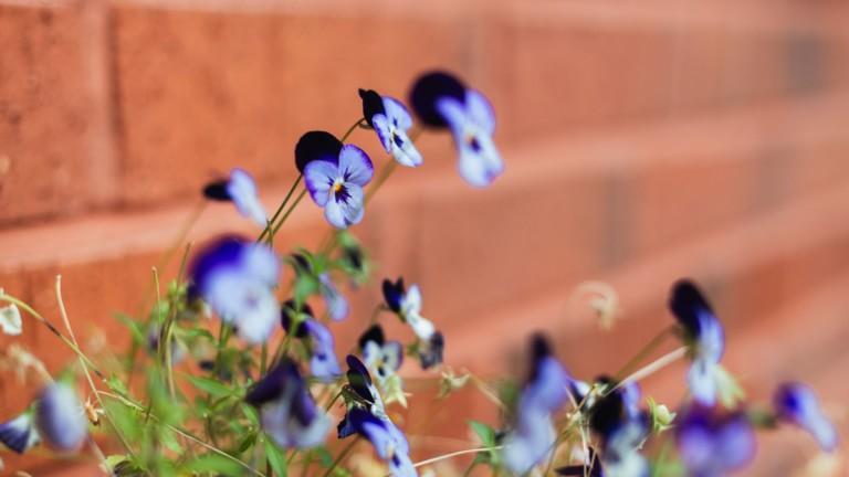 Tiiliseinä, jonka edessä on kukkia.