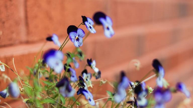Tiiliseinän edessä on kukkia.