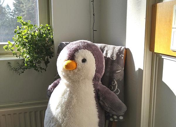 Pehmolelupingviini istuu ikkunan edessä tuolilla.